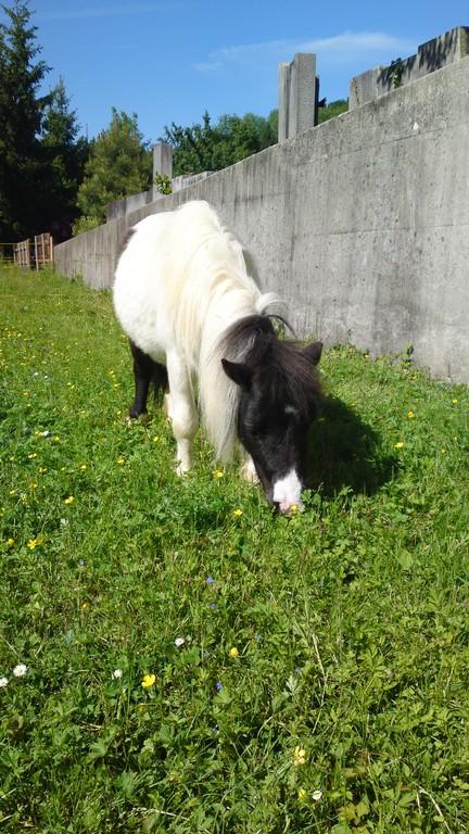 Kira ist eingezogen auf esthis-ponyfarm