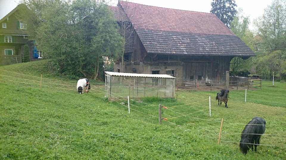 Esthis Ponyfarm hinten - Weide