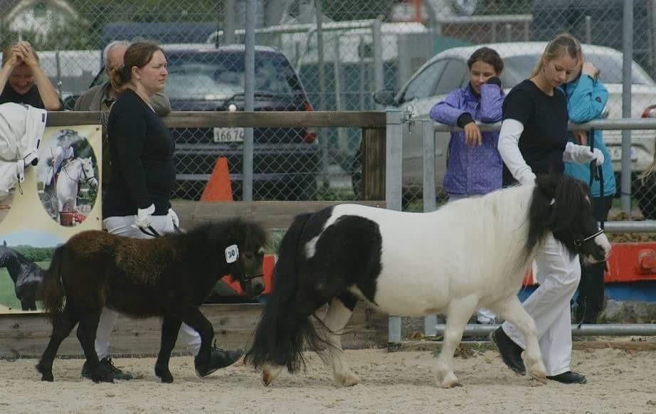 Nationale Ponyschau Balstahl 2015, 2. Rang