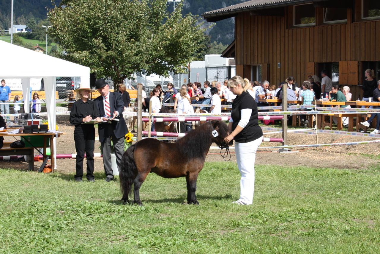 Nationale Ponyschau Balstahl 2012, 6. Rang
