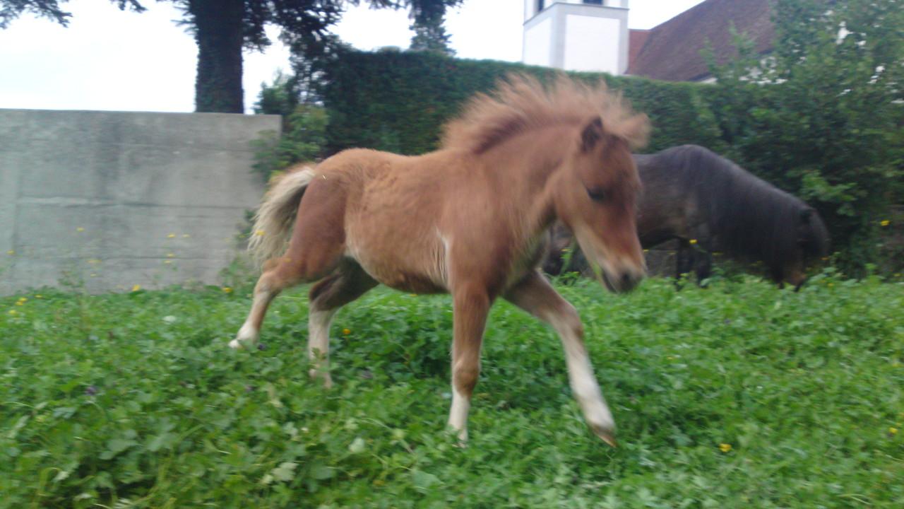 3 Monate alt, die kleine Kimara