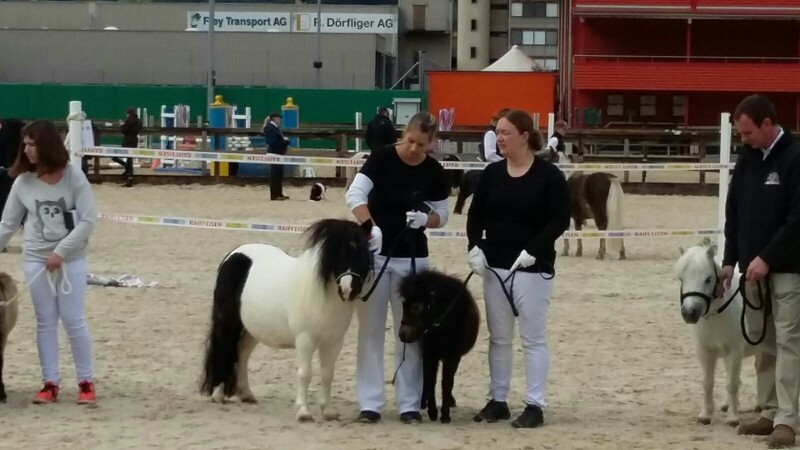 Nationale Ponyschau Balstahl 2015, 3. Rang