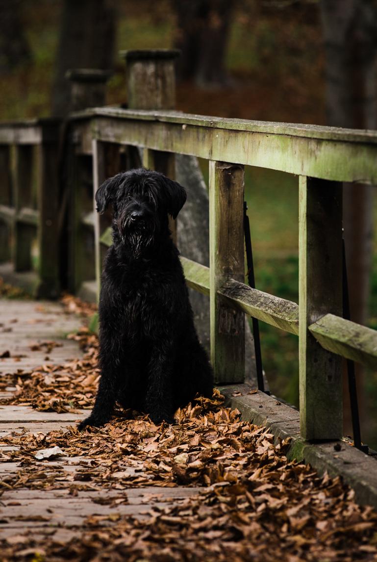 Hundefotos, Tierporträt, Tiefurt