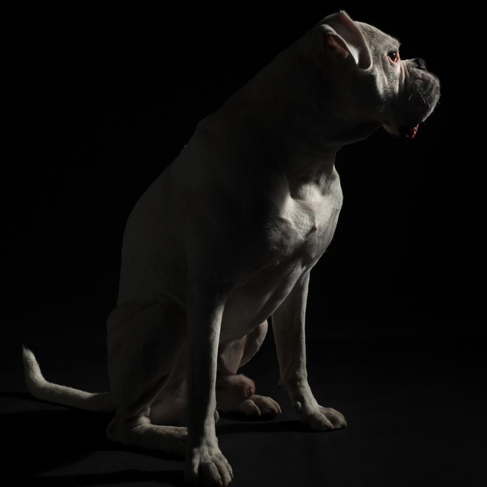Tierportrait, Leica Q
