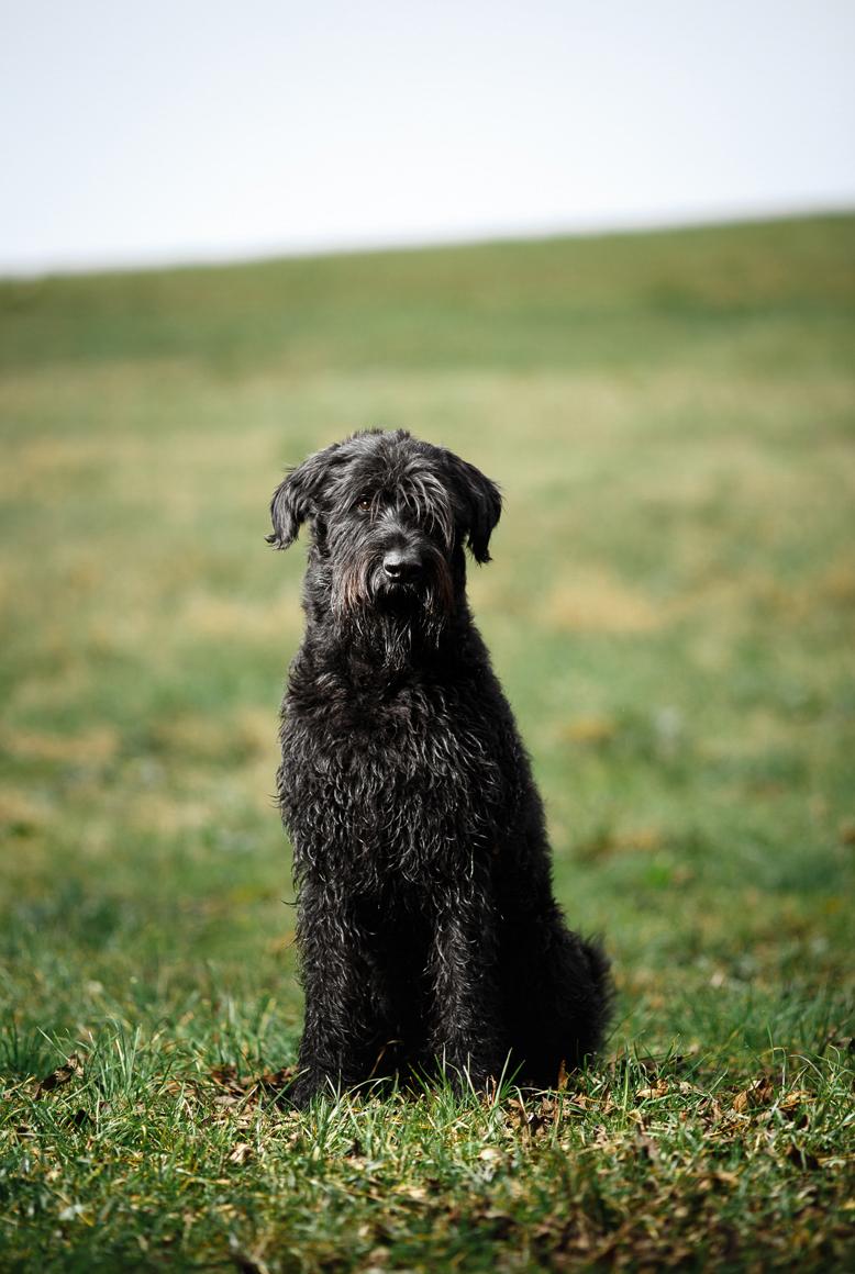 Hundefotos, Tierporträt