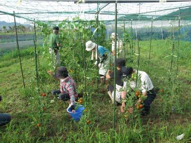 バイオクリーンで作られた堆肥は、畑で再利用されます