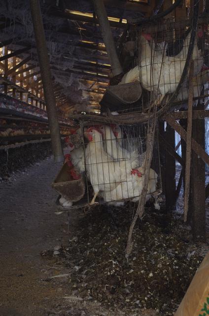 2011年日本の養鶏場