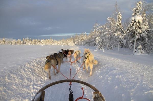 freaky finance, freaky travel, Norwegen, Schnee, Wildnis, Hundeschlittenfahrt, Schlitten, Hunde, Geschwindigkeit, Abenteuer