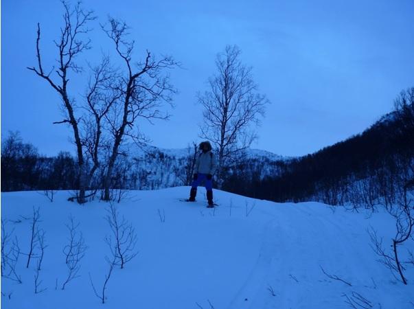 freaky finance, freaky travel, Norwegen, Schnee, Wanderung, Schnewanderung, Wald, Berge, Schneeschuhem Wanderer, Spaziergang, Polarlichter