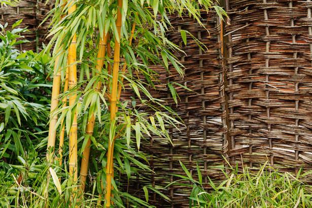 Plante de bambou au jardin par Petr Kratochvil  http://www.publicdomainpictures.net/view-image.php?image=16250&picture=plante-de-bambou-au-jardin