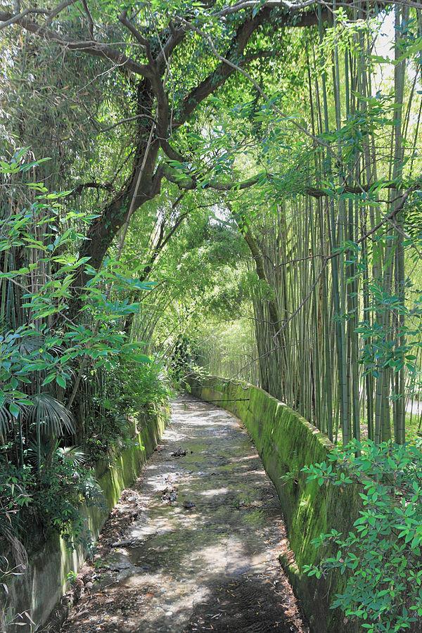 «2014 Suchum, Ogród botaniczny (22)» par Photo: Hons084 / Wikimedia Commons. Sous licence CC BY-SA 4.0 via Wikimedia Commons - https://commons.wikimedia.org/wiki/File:2014_Suchum,_Ogr%C3%B3d_botaniczny_(22).jpg#/media/File:2014_Suchum,_Ogr%C3%B3d_botani