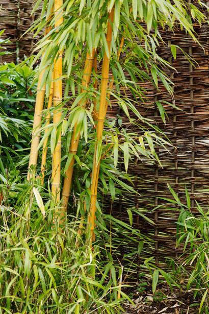 Bambou au jardin par Petr Kratochvil  http://www.publicdomainpictures.net/view-image.php?image=16251&picture=bambou-au-jardin