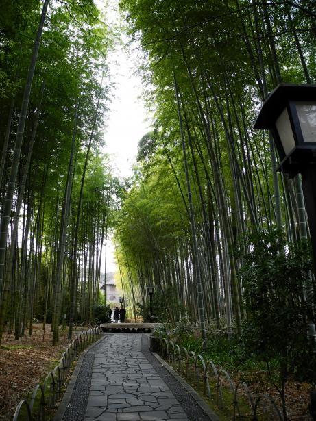 Bambou fraîche par santa delux