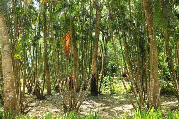 http://www.publicdomainpictures.net/view-image.php?image=39509&picture=bamboo-garden