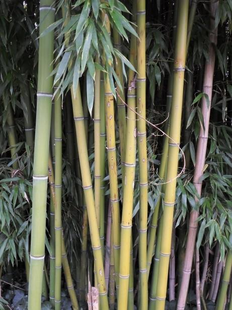 Bambou, chaume et végétation Bambou, chaume et végétation par alain van den hende  http://www.publicdomainpictures.net/view-image.php?image=132638&picture=bambou-chaume-et-vegetation