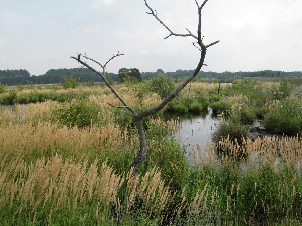 "im Naturschutzgebiet ""Großes Torfmoor"""