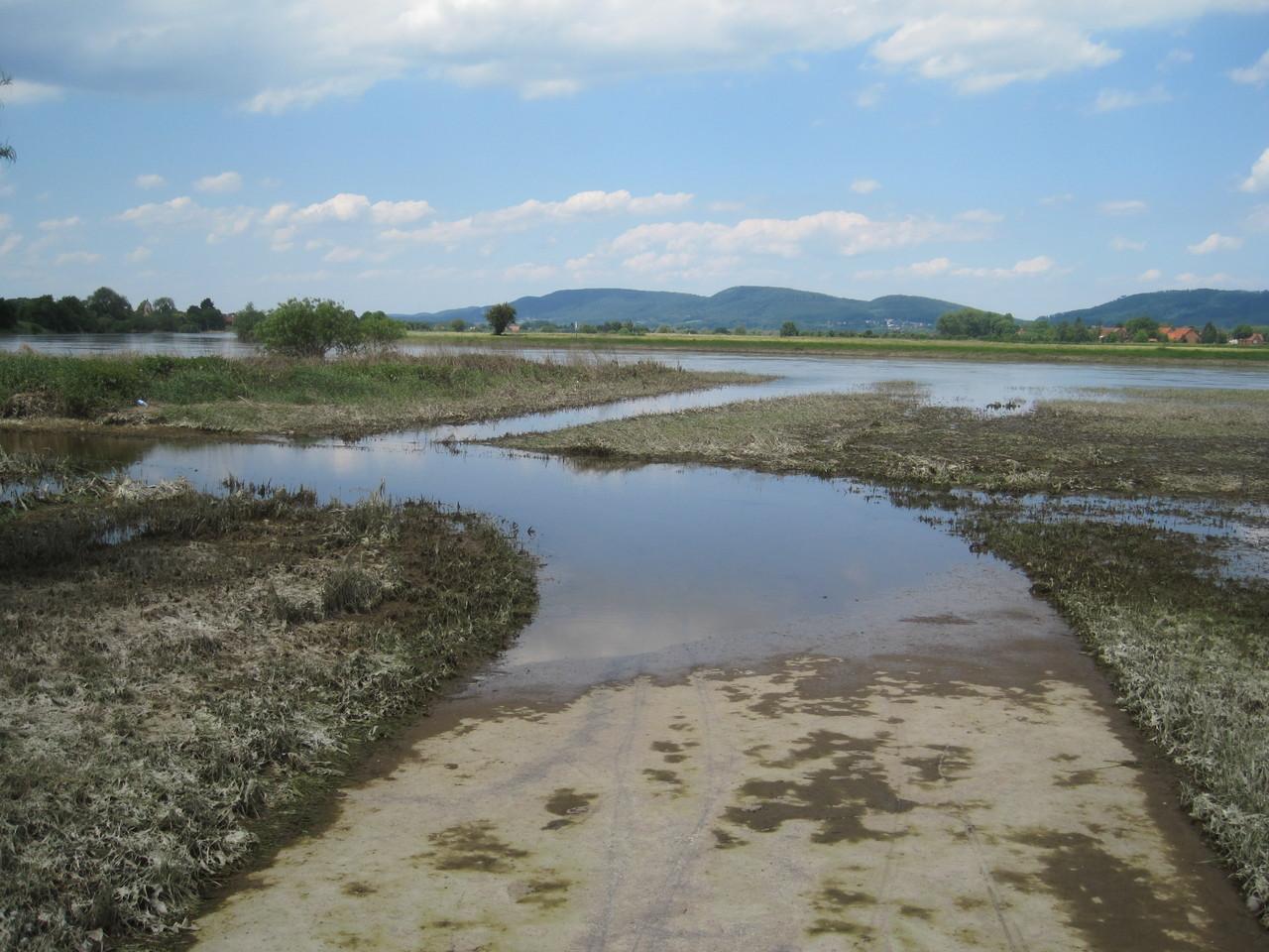 Weserhochwasser Juni 2013