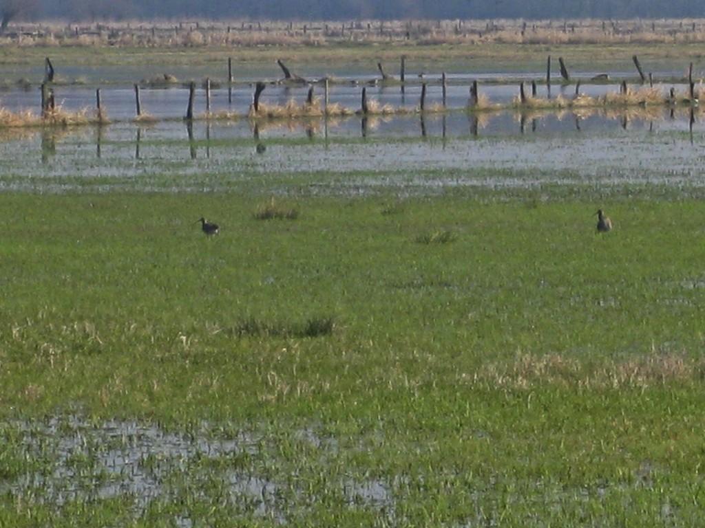 überflutete Wiesen im Naturschutzgebiet Ochsenmoor