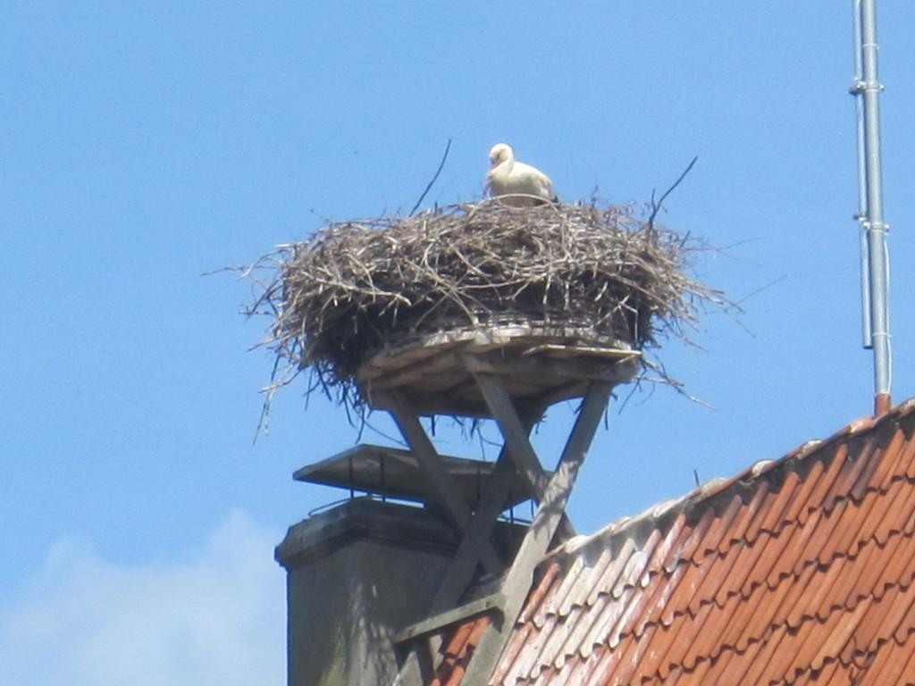 Nest auf dem Amtsgefängnis in Petershagen
