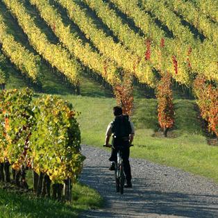 wine Anjou bike cottage Saumur