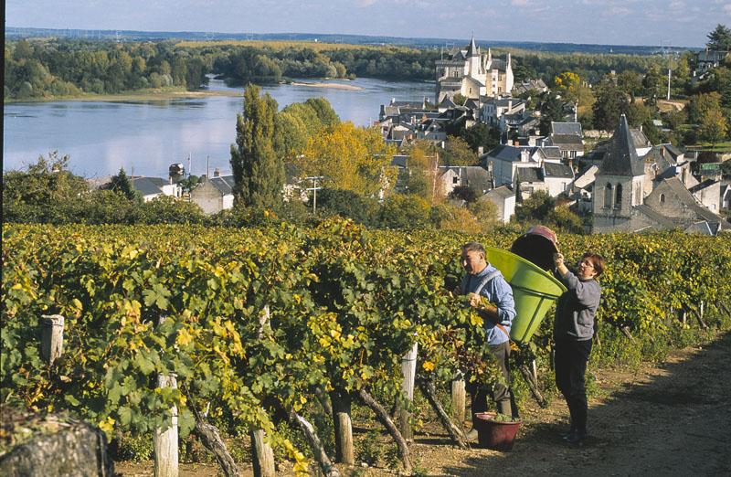 Ses vignobles et vins d'Anjou