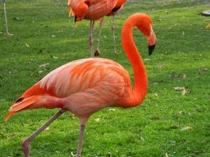 FLAMINGO EN EL ZOO