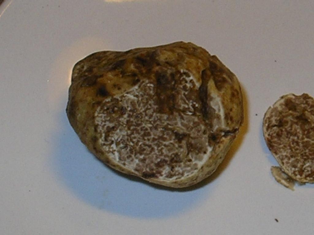 T. Magnatum Pico