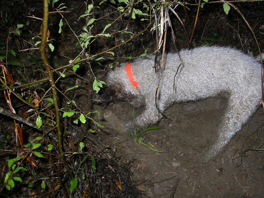 Escavazione 3