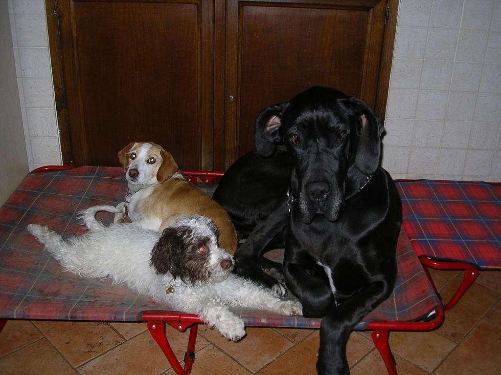 Lola, Rocky e Stellina
