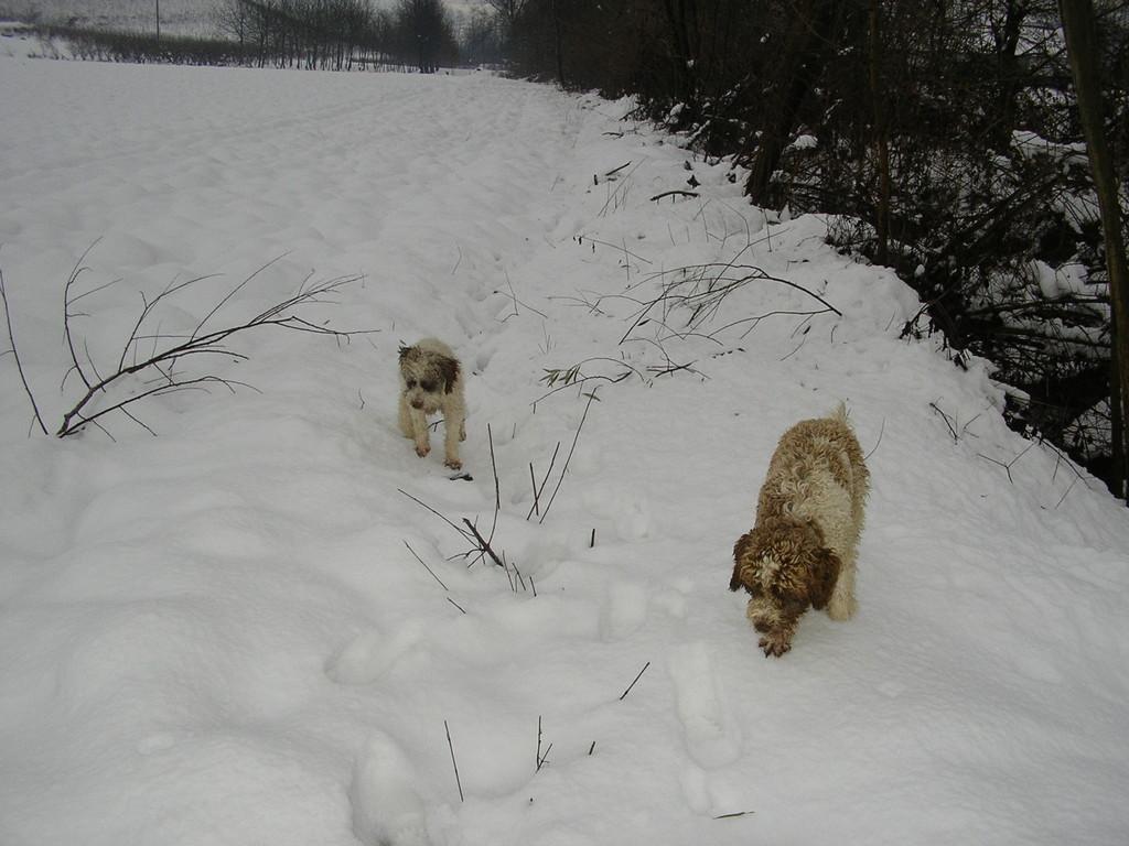 Allievi al lavorocon la Neve