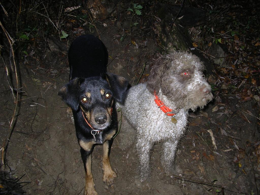 Rocky e Stella