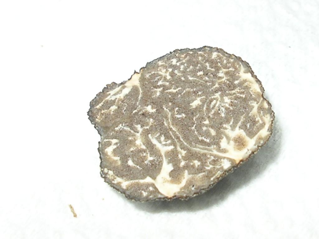 T. MACROSPORUM (Nero Liscio)