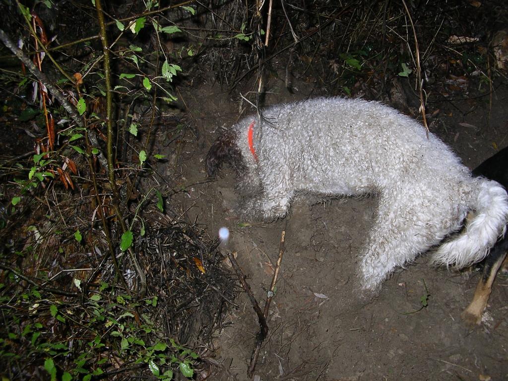 Escavazione 1