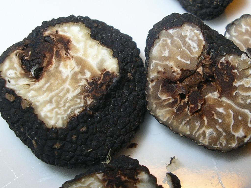 T. Brumale Vitt. varietà Moscatum De Ferry