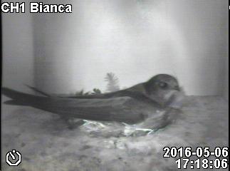 Bianca ist da