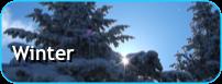 知床の冬を楽しむツアー