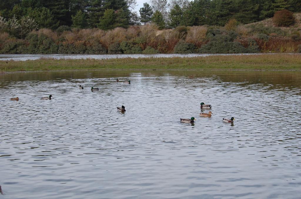 Oiseaux sur un plan d'eau