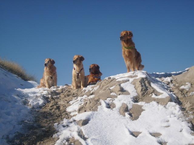 v.li. Kiwi, Ruby, Selwyn und Jonah