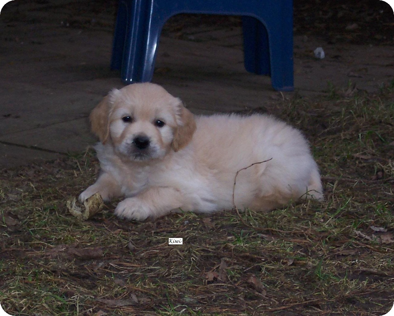 Baby Kiwi 6 Wo.