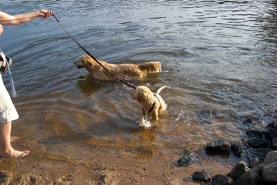 13 Wo. jung, Schwimmen lernen mit Oma Eileen...