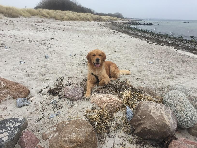 März 2017, der Strand noch menschenleer