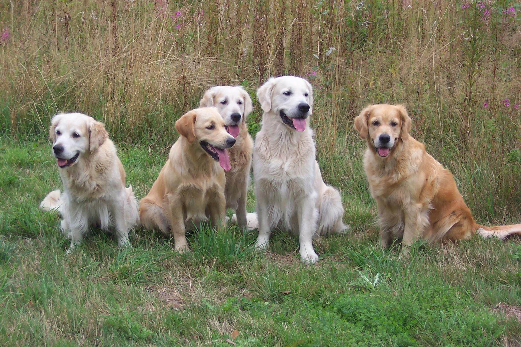 damalige Hundefamilie v.li. Tante Pepper, Kiwi, Oma Chany, Halbbruder Herman, Mutter Eileen