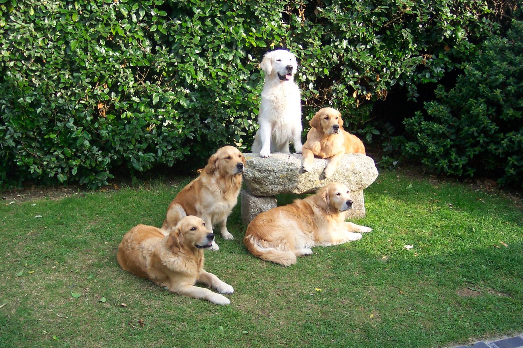 in '06 v.li. Kiwi,Loveday,Eileen,oben Herman und Selwyn