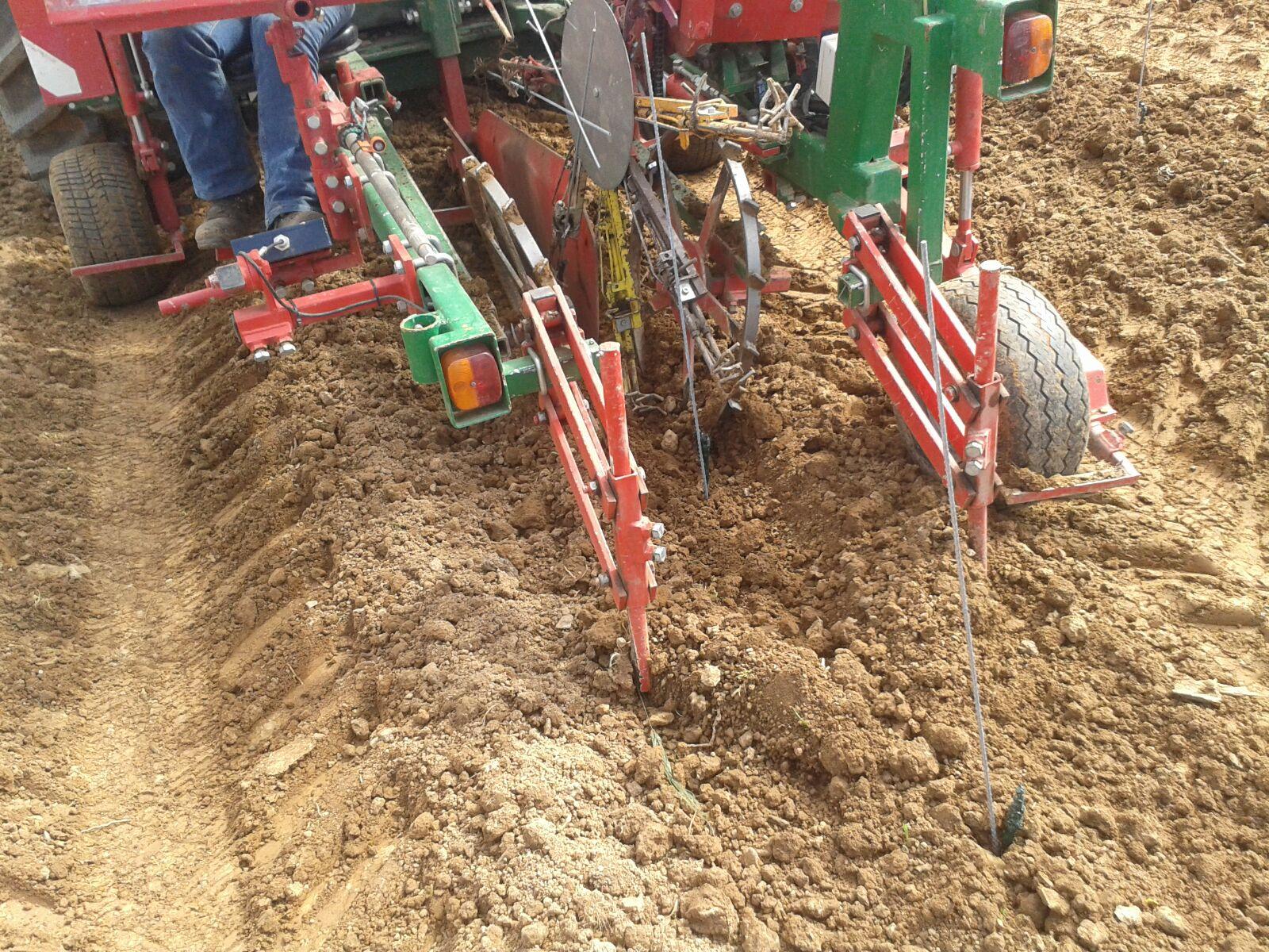 Die Pflanzmaschine setzt die Reben in den Boden.