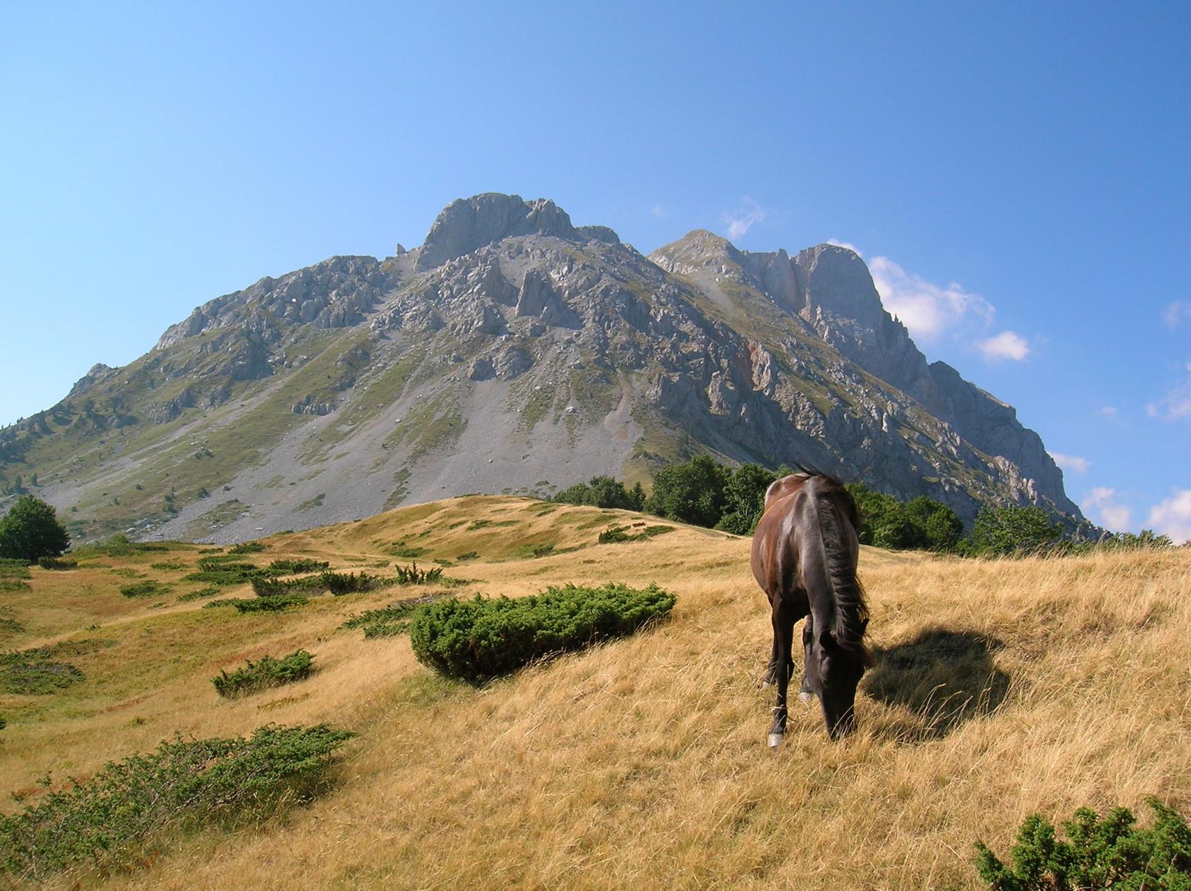 Almszene im Komovi-Gebirge auf der Ebene Štavna