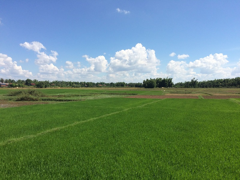 Die vielen Reisfelder