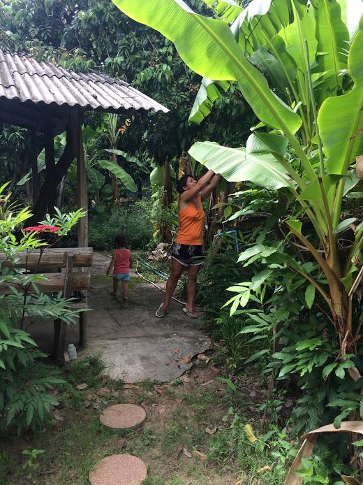 Eigene Früchte pflücken@Baan Mai Guesthouse - Litschis, Pomelo und Mango