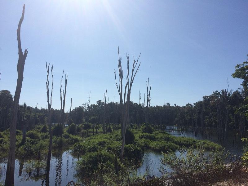 """Wegen der Stausee-Überflutungen sterben die Bäume ab - """"Schön hässlich"""""""