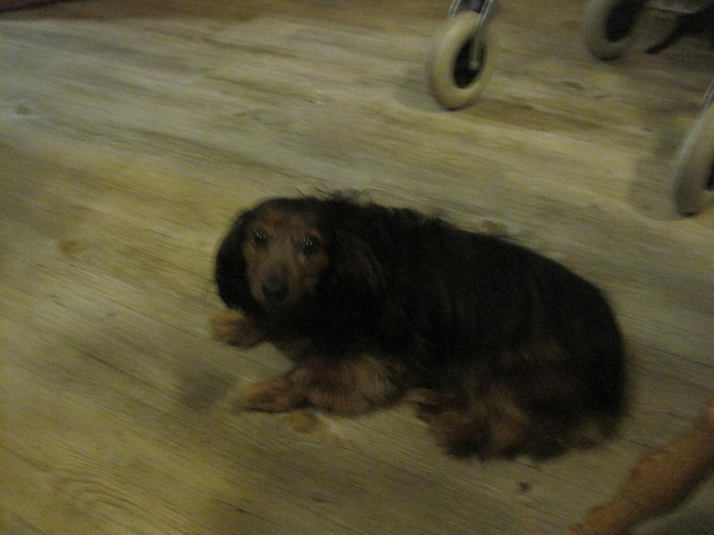 Annely, der Hund von Frau Pflüger