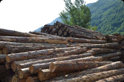 legna a km 0 del Trentino